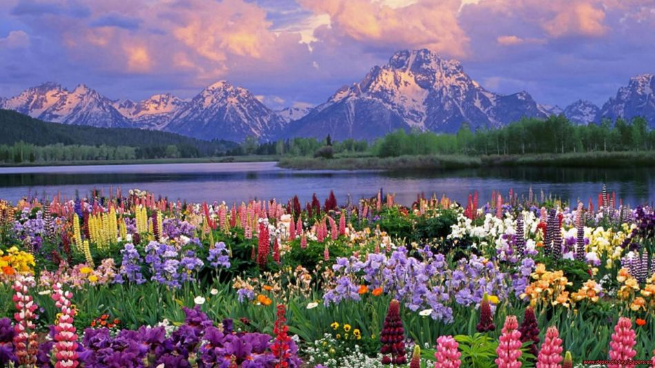 Flower garden in front of moutain