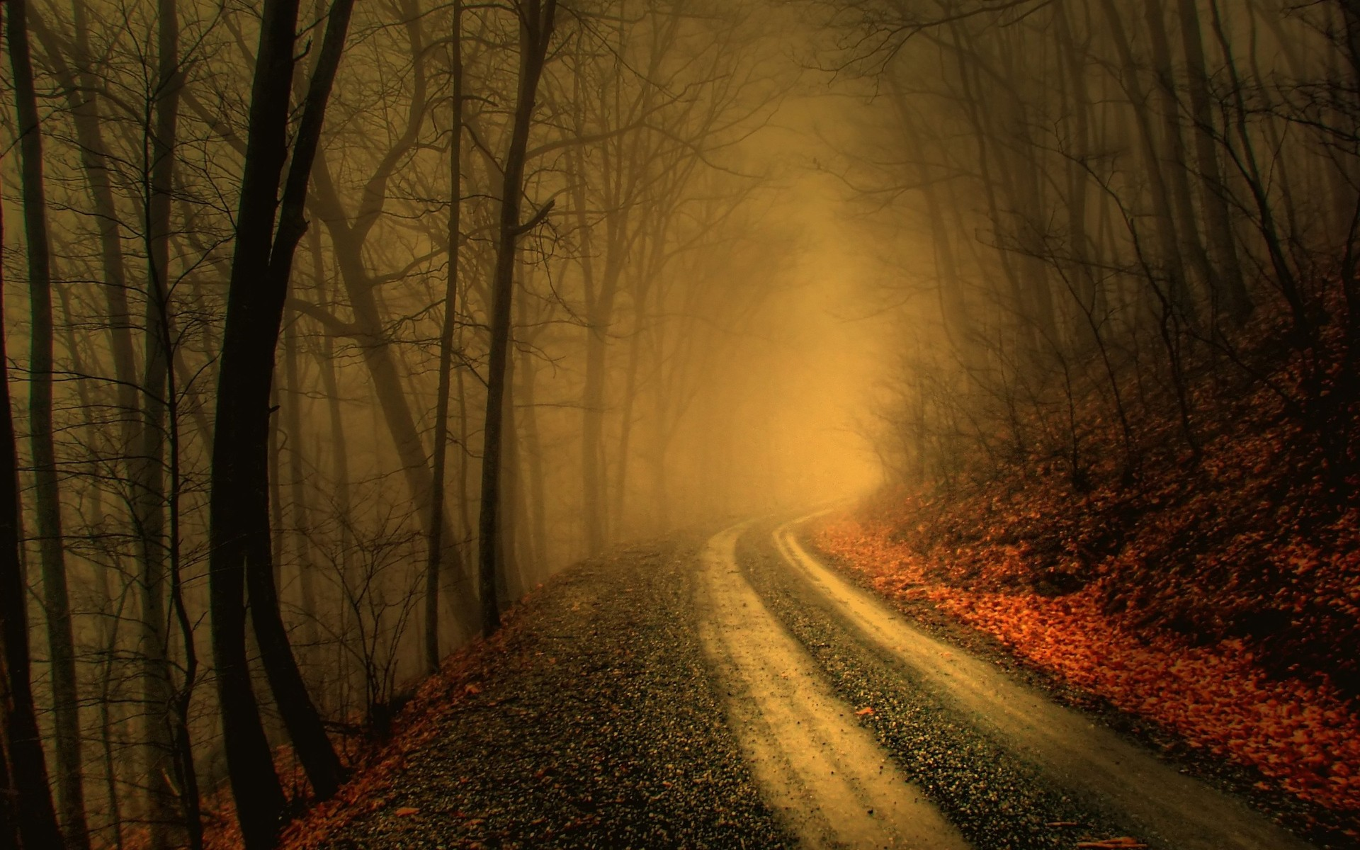 Foggy Road In Dark Forest Hd Wallpaper