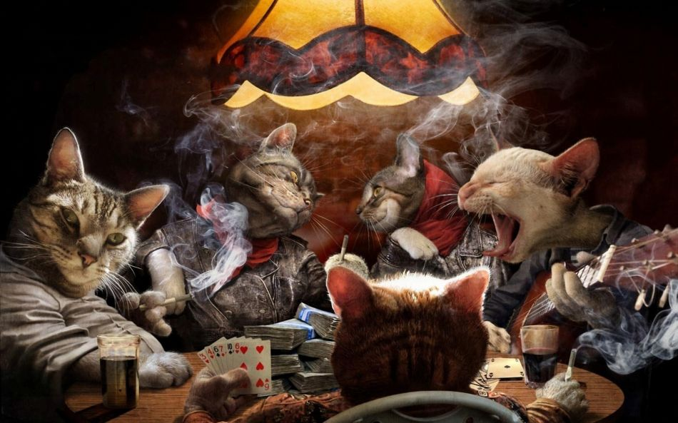 cat playing poker