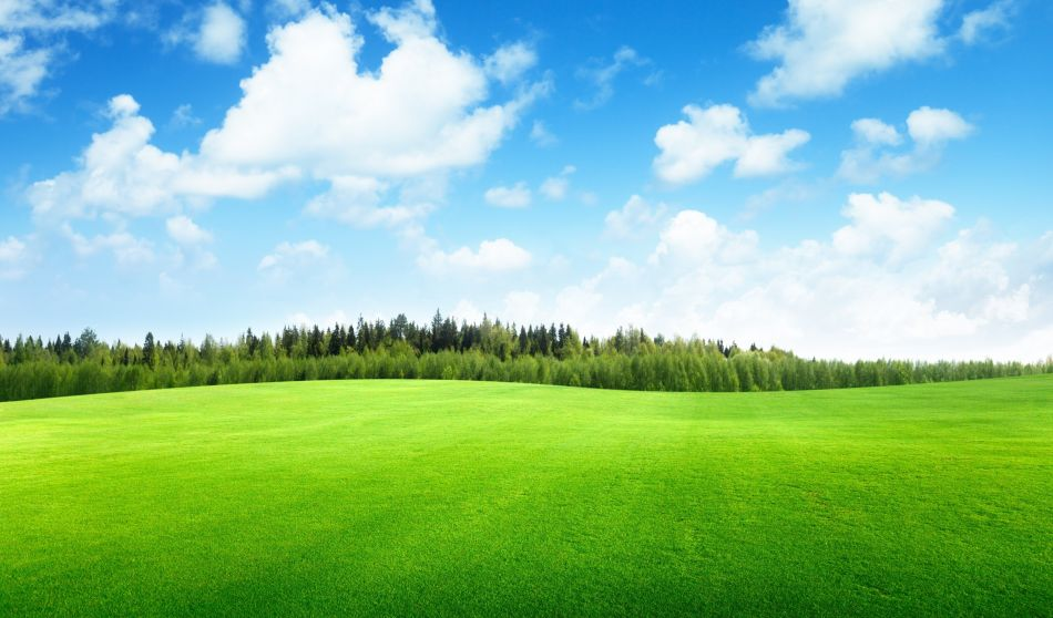 Grass Field Hd Wallpaper