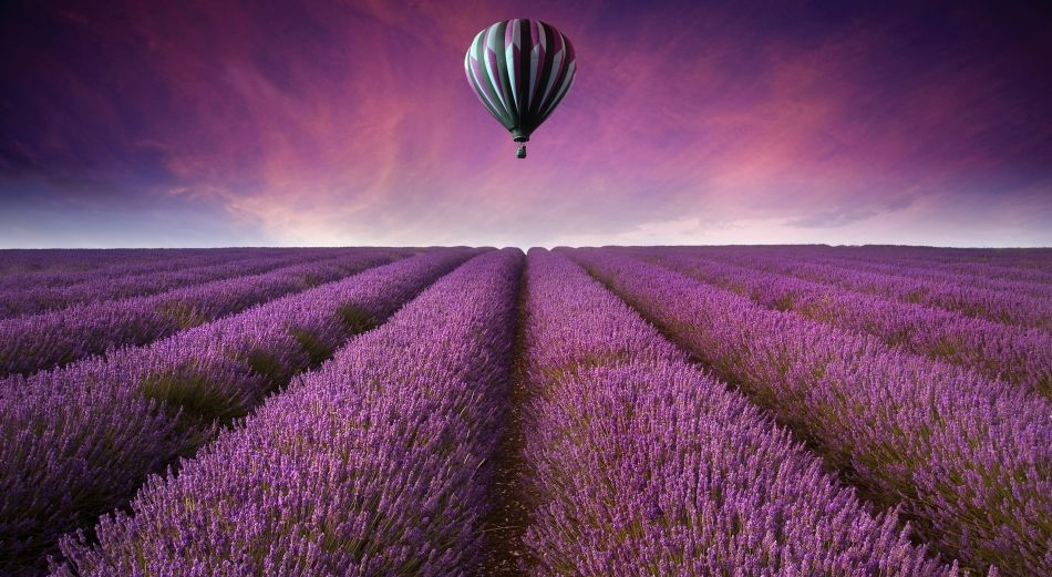 Lavender field air balloon