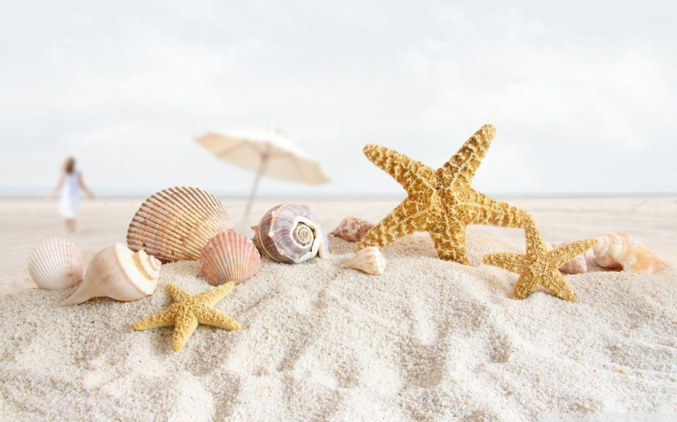 starfish seashell
